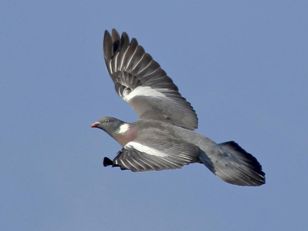 Выяснились причины гибели тысяч птиц на Кубани