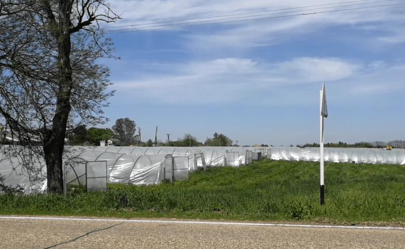 субсидии на теплицы в краснодарском крае 2021